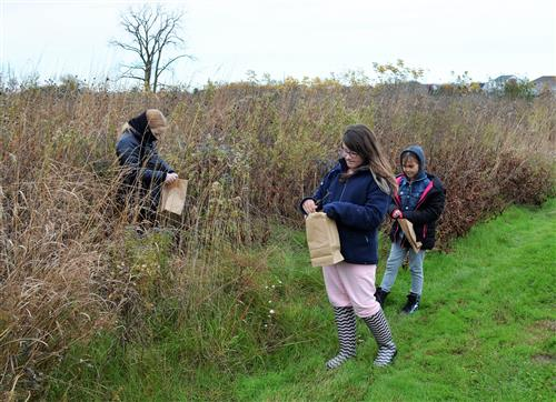 Photo of students collecting seeds