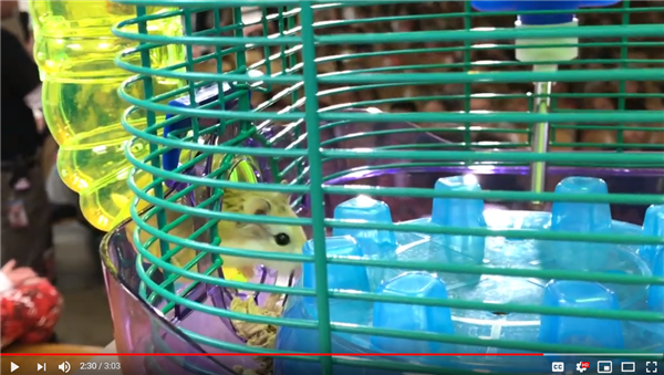 Photo of Hamster